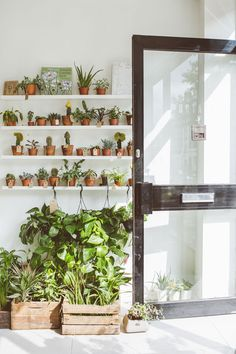 Botany Shop / Plant Shop