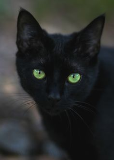 Black Cat Breeds With Green Eyes Pretty Cats, Beautiful Cats, Animals Beautiful, Pretty Kitty, Gorgeous Eyes, Hello Gorgeous, Beautiful Things, Cute Cats And Kittens, Cool Cats