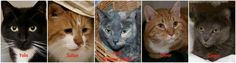 We still have several cats over 5yo who qualify for waived adoption fees! #cats #adopt