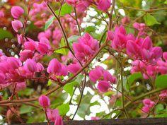 Flor de Amor agarradinho