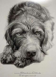 Really cool drawing Really Cool Drawings, Griffon Dog, Pencil Drawings Of Animals, German Wirehaired Pointer, Dog Artwork, Wire Haired Dachshund, Felt Dogs, Happy Art, Dog Paintings