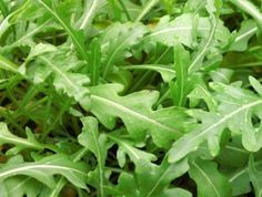 This perennial Arugula also know as wild arugula produces year round. grows in great in cooler climates and containers. Perennial Vegetables, Container Gardening Vegetables, Vegetable Garden, Garden Plants, Edible Plants, Edible Garden, Permaculture, Culture Champignon, Seed Shop