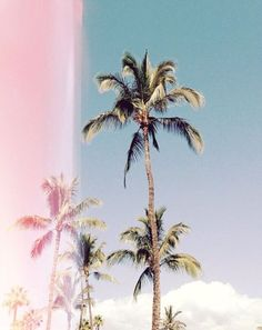 Beautiful Palm Tree Picture Featuring Pretty Pink And Blue Overlay