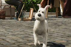 Foxterrier Guide till Tintins karaktärer - Aktuellt - MovieZine.se