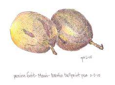 George Mellen - pen and colored pencil - passionfruit