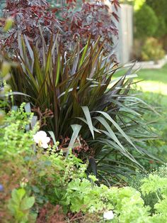 Create Contrasts  White stands out most next to black -- so use that same idea in garden design by combining plants with light-color flowers or foliage with darker ones. A purple-leafed phormium makes a strong background for the white variegation in a scented geranium or the brightness of a pristine rose bloom.