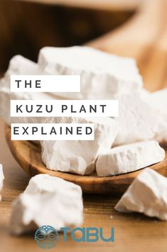 The kuzu plant is one of the largest vegetable roots in the world, the average weight of each is around Its leaves and root have long been used as a food and its fibrous stems, as threads for fabrics and baskets. Vegan Appetizers, Vegan Snacks, Vegan Dinners, Healthy Eating Recipes, Vegan Recipes, Free Recipes, Plant Based Diet, Plant Based Recipes, Breakfast Bowls