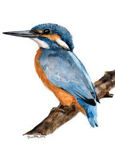 Handsome Common Kingfisher Watercolour Art Print by Ghirardelli