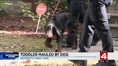 "Very shocking behavior for a Gordon Setter. Did the ""rescue"" take the time to evaluate the dog's temerpament? A 14-month-old boy was mauled by his family's dog Wednesday when he tried to grab a toy from the Gordon setter's mouth at a home on Detroit's west side."