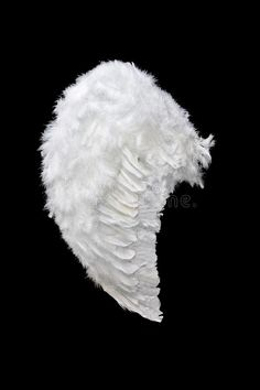 White angel wing stock image