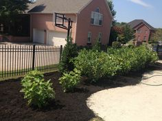 New landscape renovation. Click to read about it.