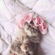 Image via We Heart It #animal #baby #bed #cat #cuddle #cuteness #flowers #kiss #pet #roses #cute #love