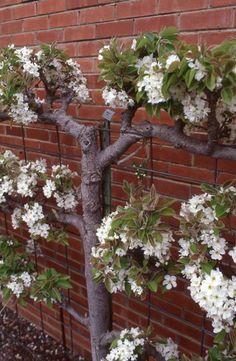 Managing & Keeping Healthy Fruit Trees