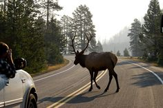 Now this is a Montana, traffic jam  !!!