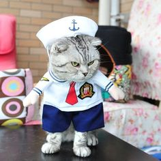 Do you want your own Sailor? Well now you can with this adorable costume. Perfect for Cats 🐱 or Dogs 🐶, for Halloween 🎃 or just for fun. This is easy to put on and comfortable for your pet to wear which means you will be able to get better photos to share with your friends on social media. We have the best quality pet costumes so rest assured you won't be disappointed with your purchase. #halloween #petcostume #dogcostume #catcostume #petsupplies #funnypets Pet Costumes For Dogs, Pet Halloween Costumes, Funny Costumes, Cat Costumes, Halloween Cat, Halloween Clothes, Halloween Christmas, Funny Cats, Cute Cats