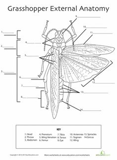 baleen whale anatomy diagram to label hs swimming creatures of the fifth day pinterest. Black Bedroom Furniture Sets. Home Design Ideas