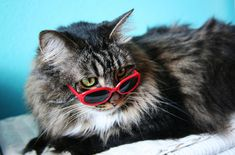 Have you ever thought that your cat was just too cool for you?