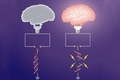 When we learn something new, our brain cells break their DNA, creating damage that neurons must immediately repair