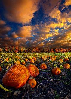 pumpkin crossing    phil-koch