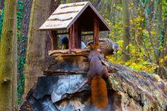 Begegnung Eichhörnchen, Stockente  #eichhörnchen #squirrels #écureuil #ardilla #esquilo #ente #duck