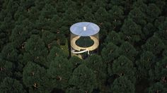 Aibek Almasov, Tree in The House