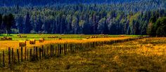 Idaho Hay Bales by David Patterson