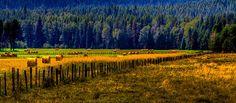 Idaho Hay Bales by David Patterson