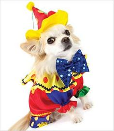 Dog Clown costume *a sammy board would not be complete w/o a chihuahua. :)*