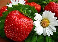 Strawberry& flowers