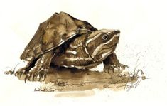 """The Outside Story: """"Stinkin' Jim,"""" by Susie Spikol. Illustration by Adelaide Tyrol. """"I have always admired turtles and their armored ways; how they bask in the sun and retreat when the world is too much. Last summer, through the perseverance of a nine-year-old boy, I found myself holding a small, golf-ball-sized turtle…"""""""