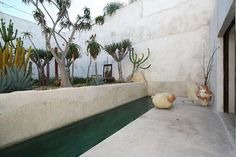 Lap pool and succulent garden