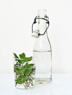 Thyme Water | Mariya Miteva