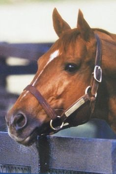 Big Red - To this day, still holds the record of the fastest horse ever.  An amazing animal.  His stride was incredible.