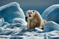 The  King - Tasiilaq, East Greenland by Moreno Bartoletti on 500px