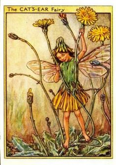 Cats-Ear Flower Fairy » Flower Fairy Prints- Vintage Fairy Prints by Cicely Mary Barker for sale