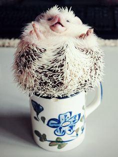 {spiked coffee} hehe! Loki the Hedgehog