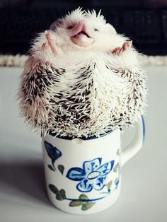 {spiked coffee} hehe! Loki the Hedgehog