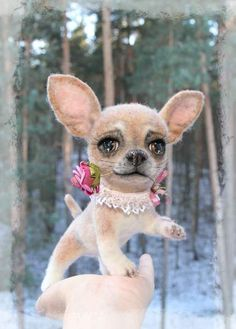 Bambi the chihuahua puppy by By Jelena K.   Bear Pile