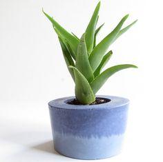 Blue Concrete Succulent Planter