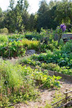 köksträdgården i Skillnadens trädgård