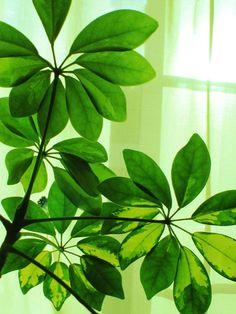 Descontaminar el aire de casa con plantas