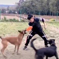 Funny Dog Videos, Funny Animal Memes, Cute Funny Animals, Dog Memes, Funny Animal Pictures, Cute Baby Animals, Funny Dogs, Animals And Pets, I Love Dogs