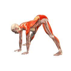 Wide-legged forward bend - Prasarita Paddotanasana - Yoga Poses   YOGA.com