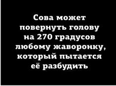 сова Funny Expressions, Friend Memes, Cheer Up, Good Mood, Story Time, Happy Friday, Quotations, Funny Quotes, Jokes