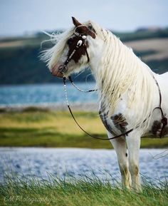 Dreamy horse in the wind by the waters edge.