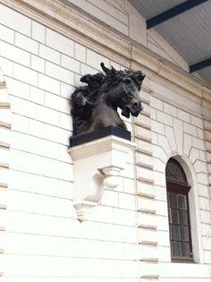 Musee fragonard ecole nationale veterinaire d 39 alfort for Adresse ecole veterinaire maison alfort