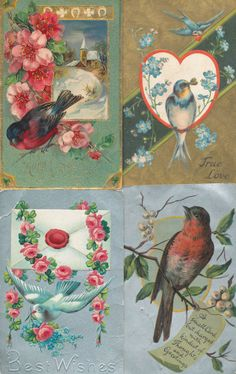 LOT of 4 PRETTY * BIRDS * BIRD VINTAGE Greetings POSTCARDS -mmm267