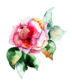 Rose flower, watercolor illustration | Stock Photo | Colourbox on Colourbox