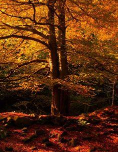 Autumn in Padley Gorge - Peak District