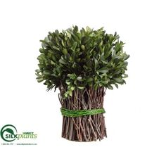 #Preserved #Boxwood Bundle - Green - Pack of 4 #artificialboxwoodball
